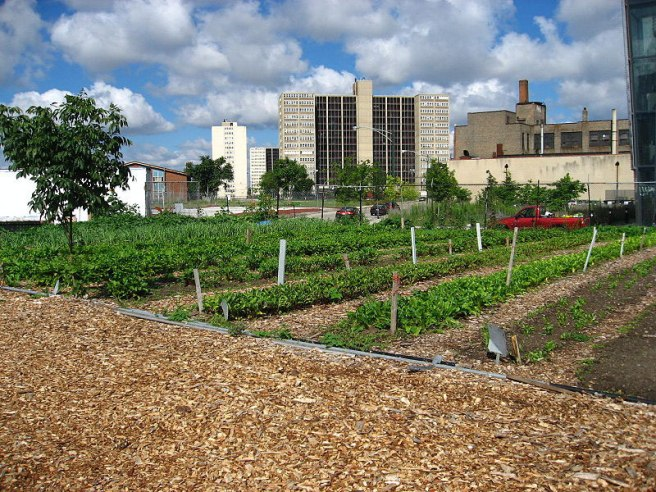 Detroit-Urban-Farm