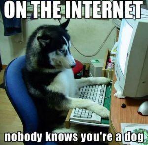 internetDog
